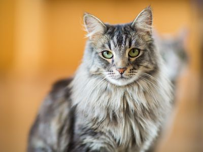 10 Most Popular Cat Breeds