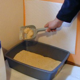 Litter Box Maintenance A Step By Step Guide