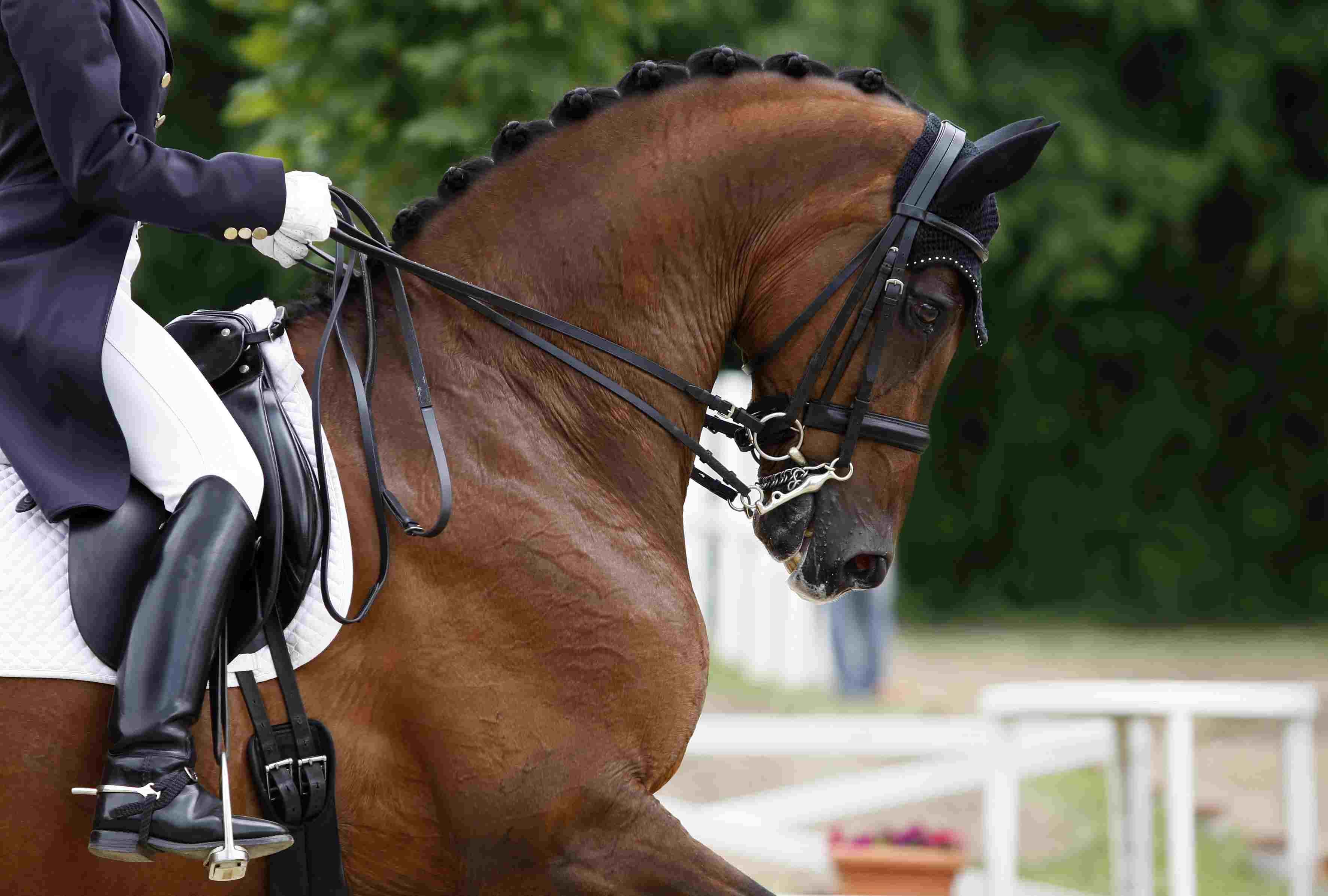 Vista cercana del caballo en una escena de doma