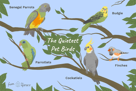 5 of the Quieter Pet Bird Species