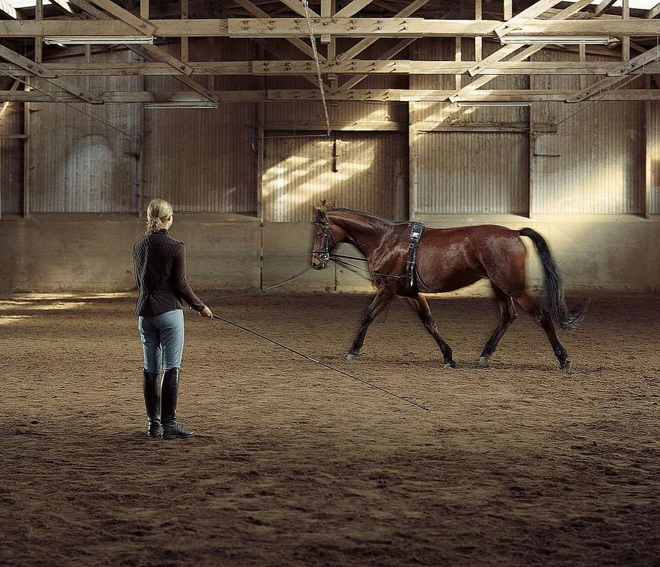 Woman lunging horse in arena.