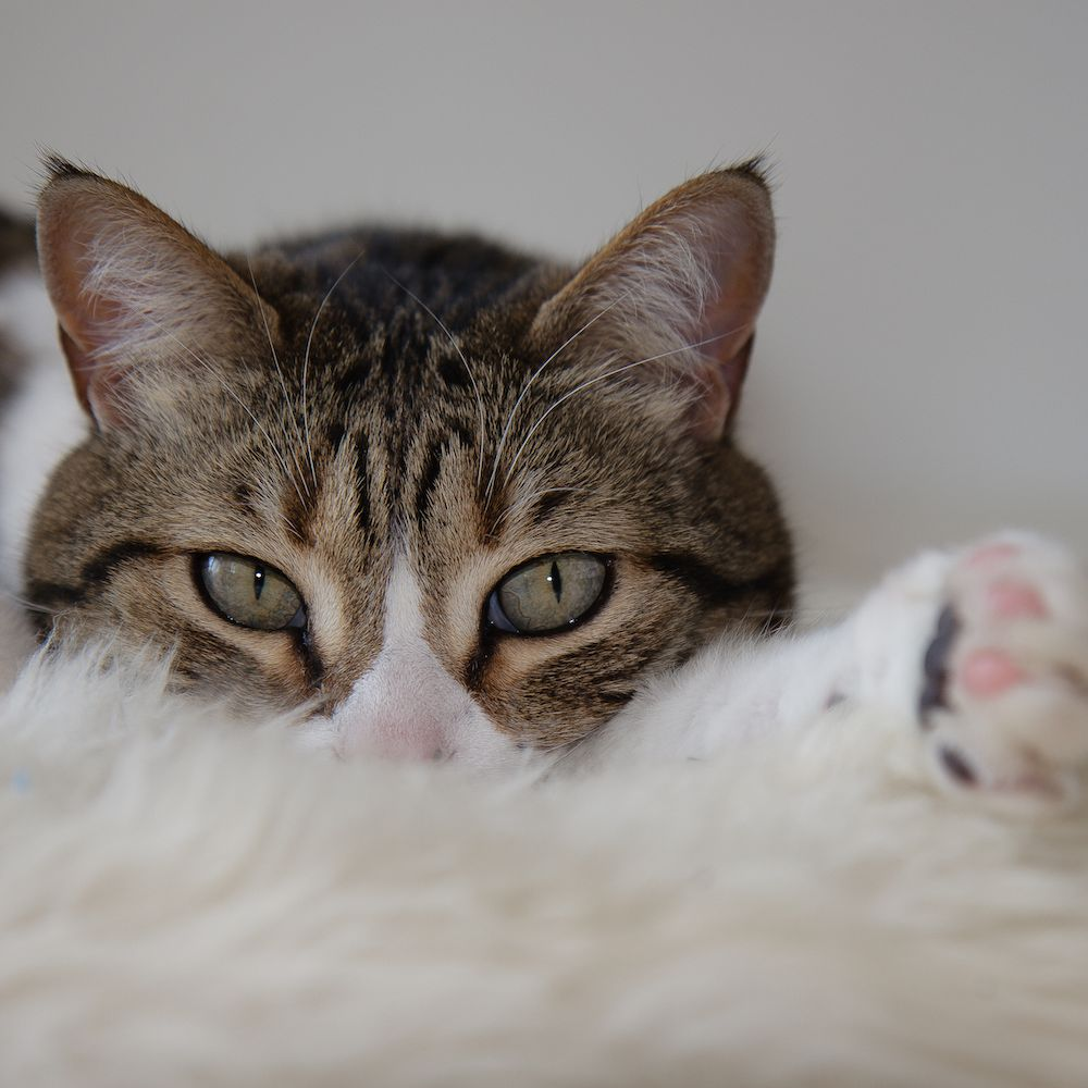 What To Do If Your Cat Is Vomiting Blood