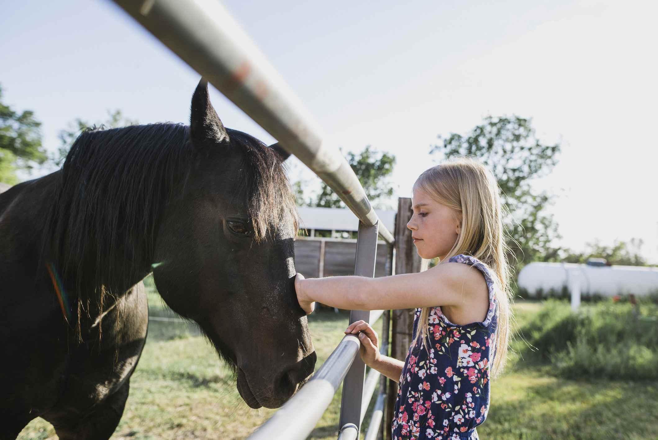 Girl petting horse through fence