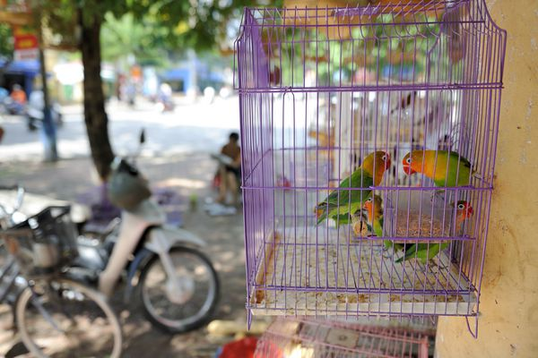 Vietnam, Haiphong, birds in cage on sale