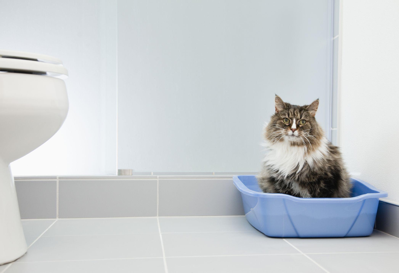 Gato sentado en una caja de arena azul en el baño
