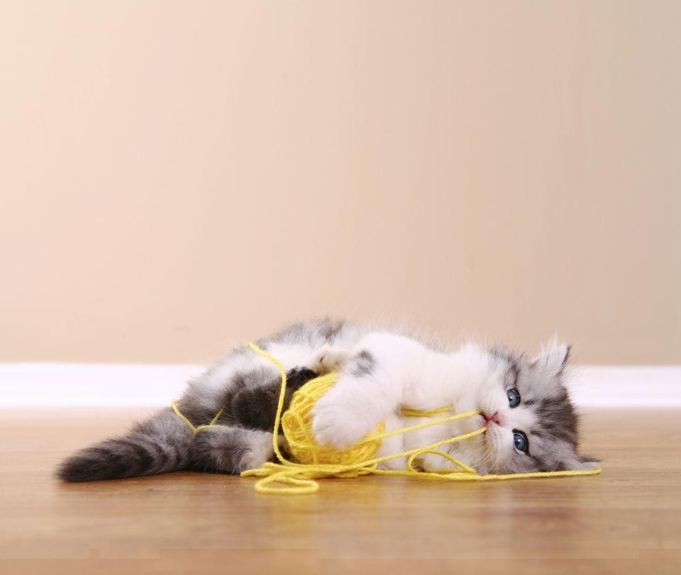 Gatito jugando con una cuerda