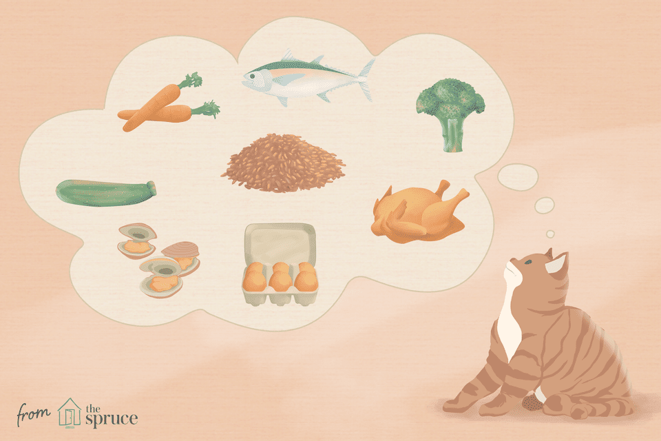 illustration of cat food recipes