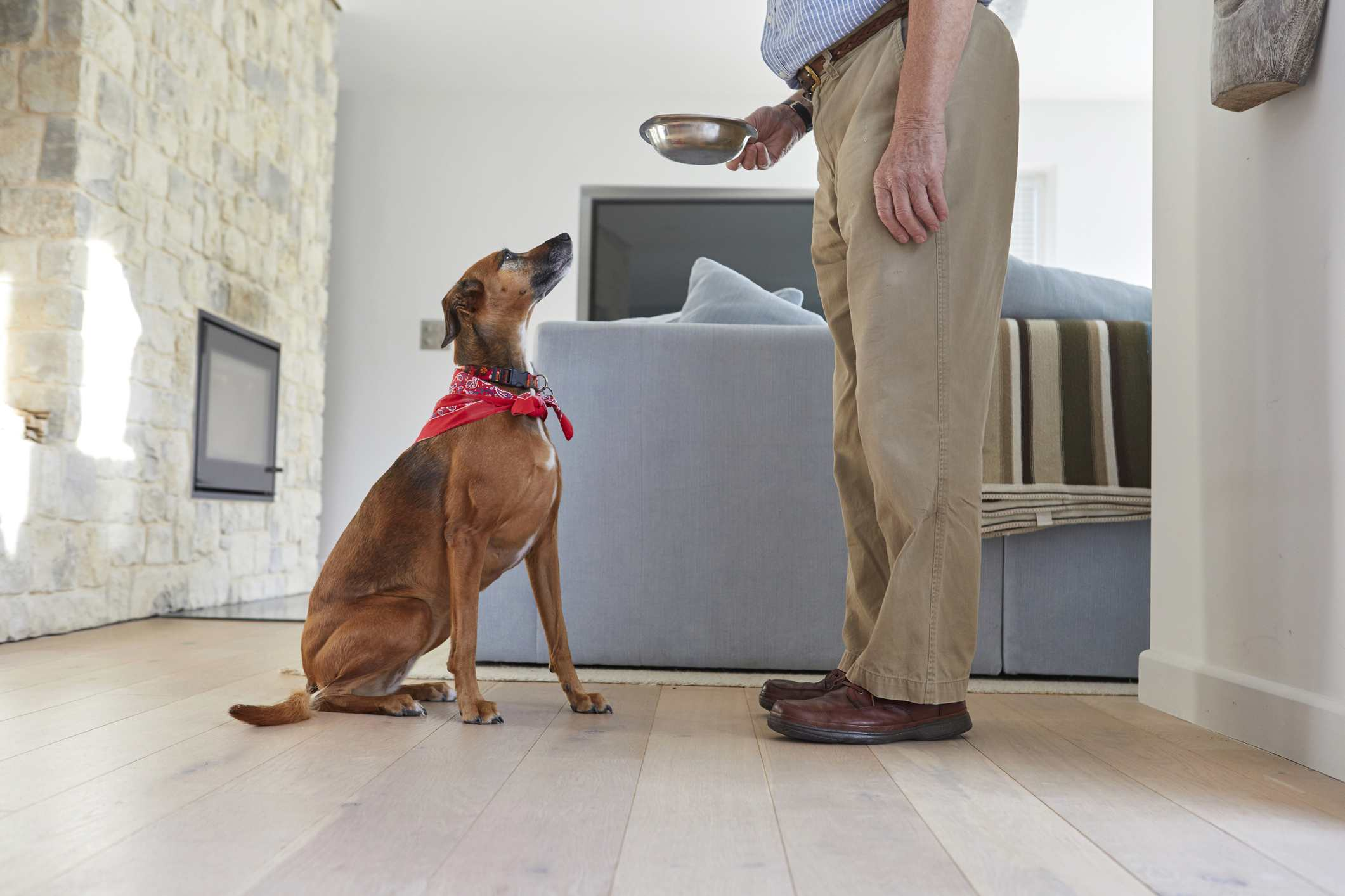 Why Dogs Jump Up And Down And How To Handle It