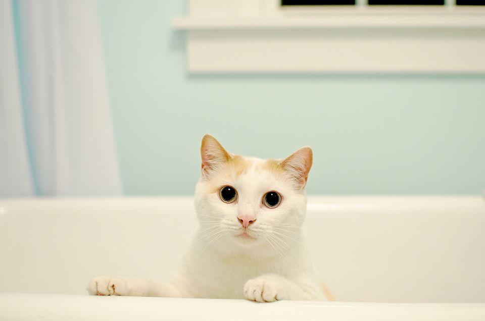 cat in a bathtub