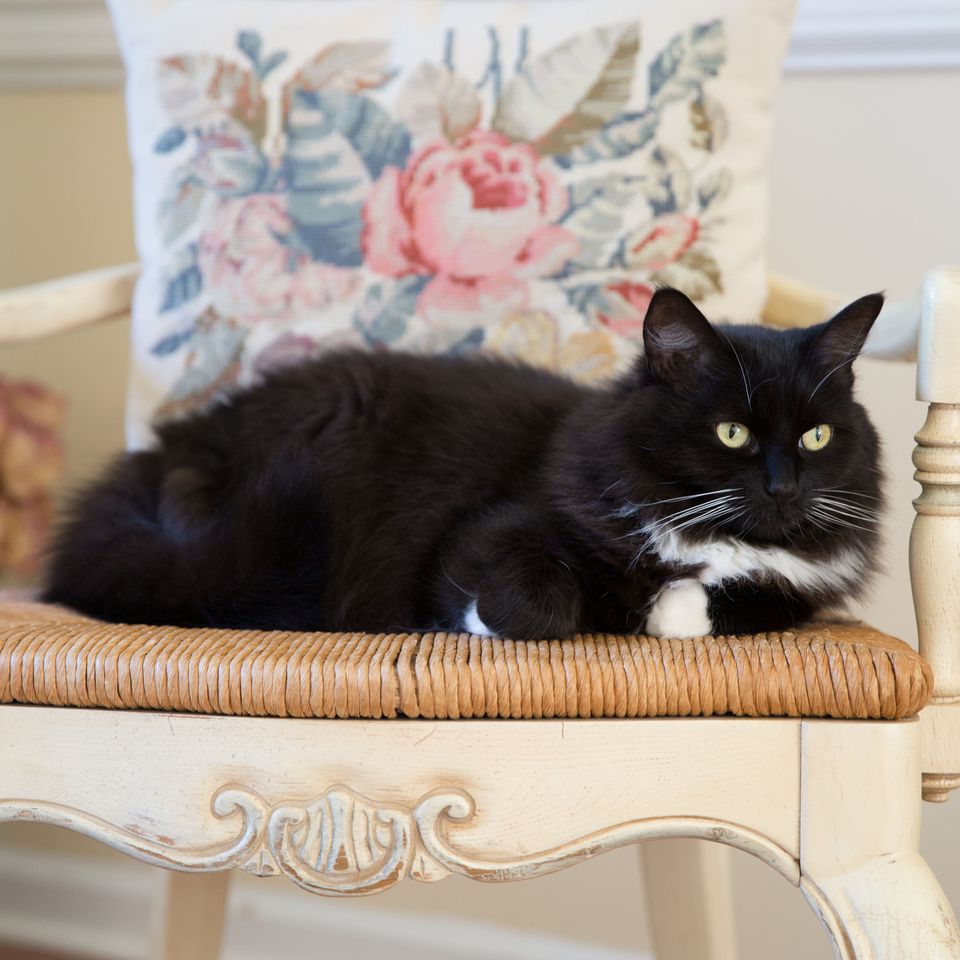 Tuxedo cat sitting on a wicker chair.