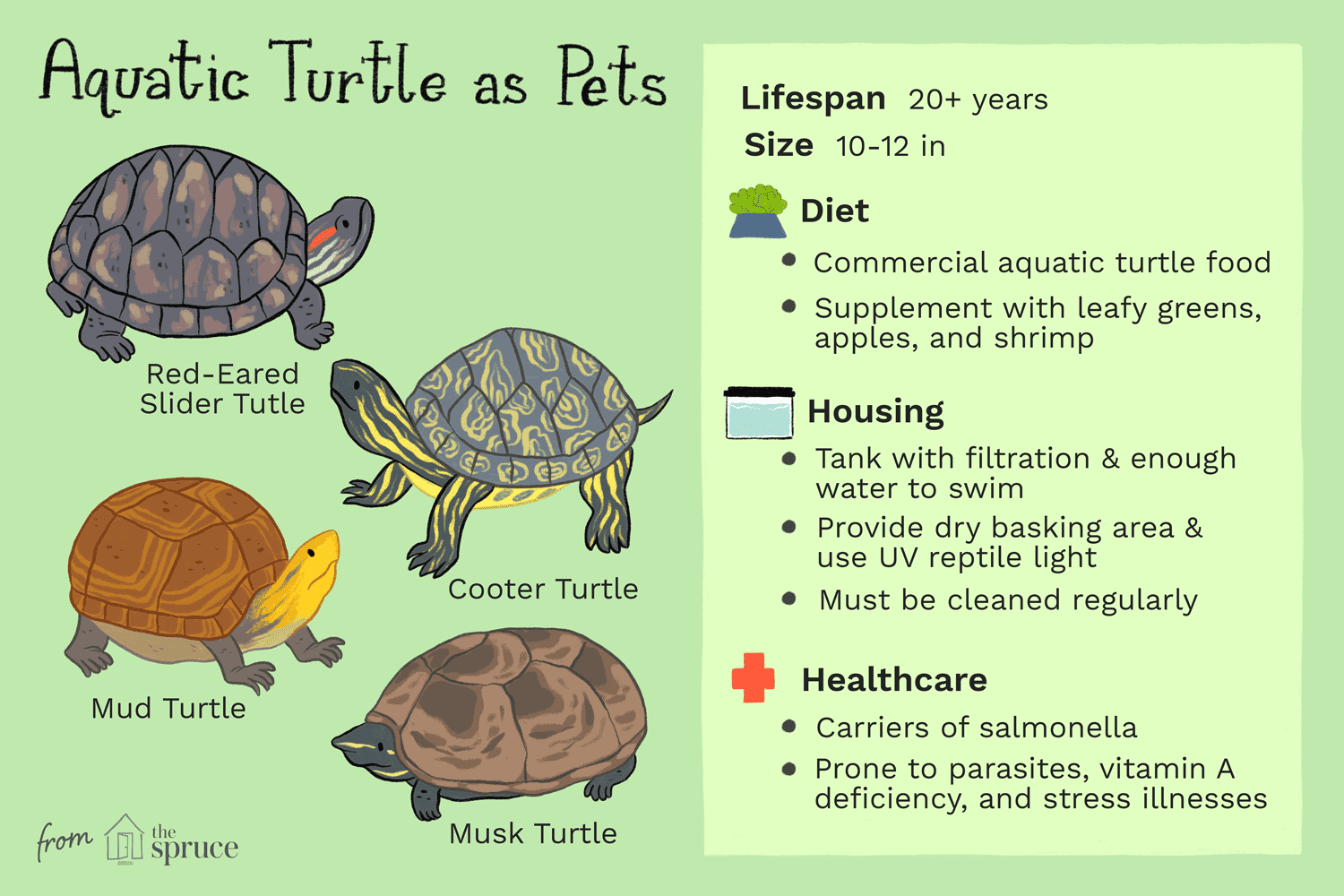 All About Keeping Pet Aquatic Turtles