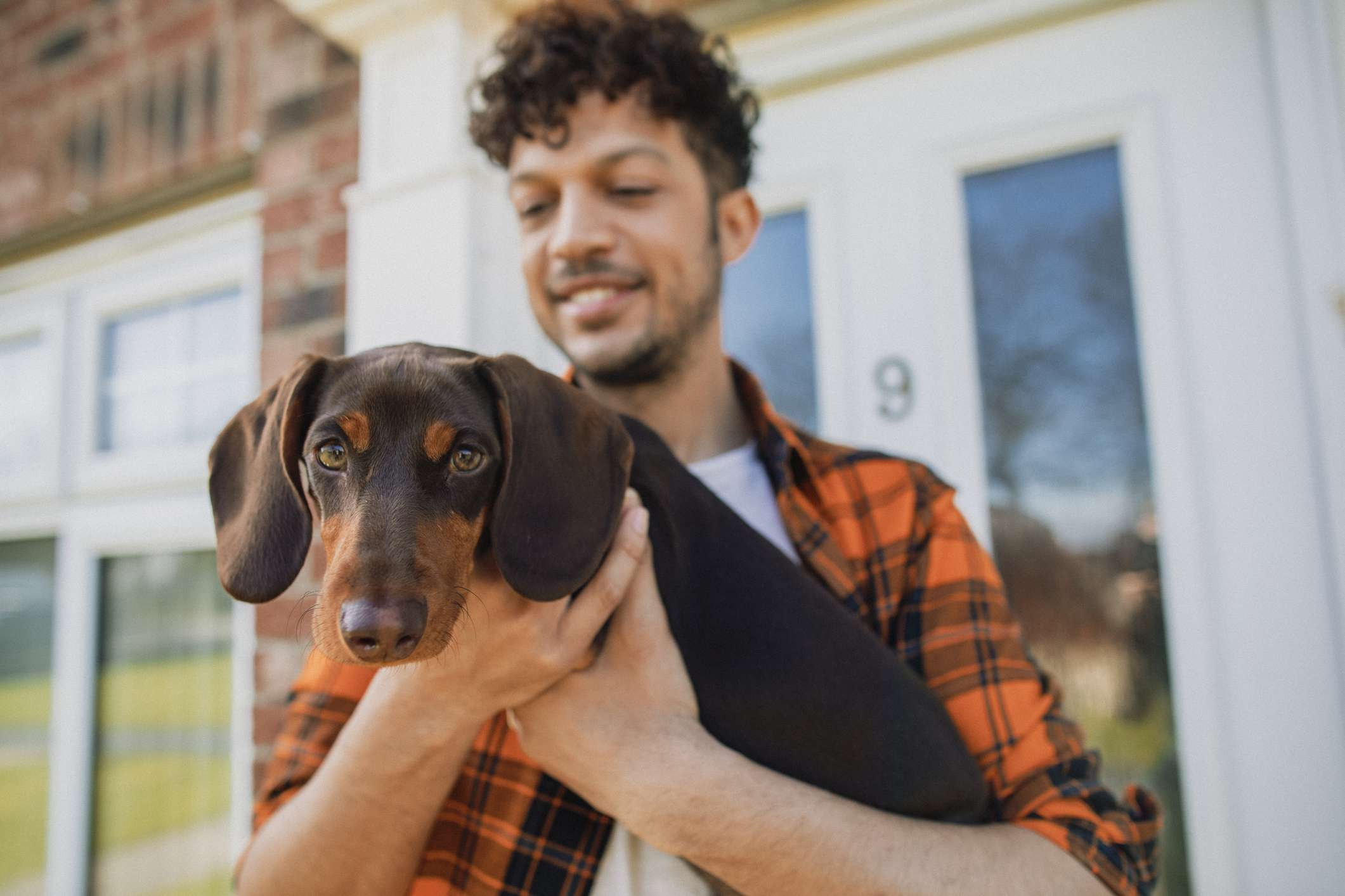 Dachshund looking at camera being held by a man.