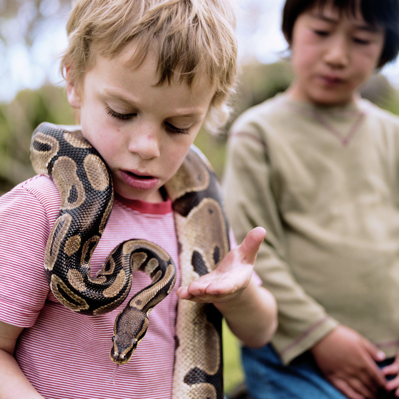 Ruski kućni ljubimci.. Two-boys--5-7--outdoors--focus-on-boy-with-ball-python-around-neck--200283340-001-5a8db0618e1b6e003678c8af