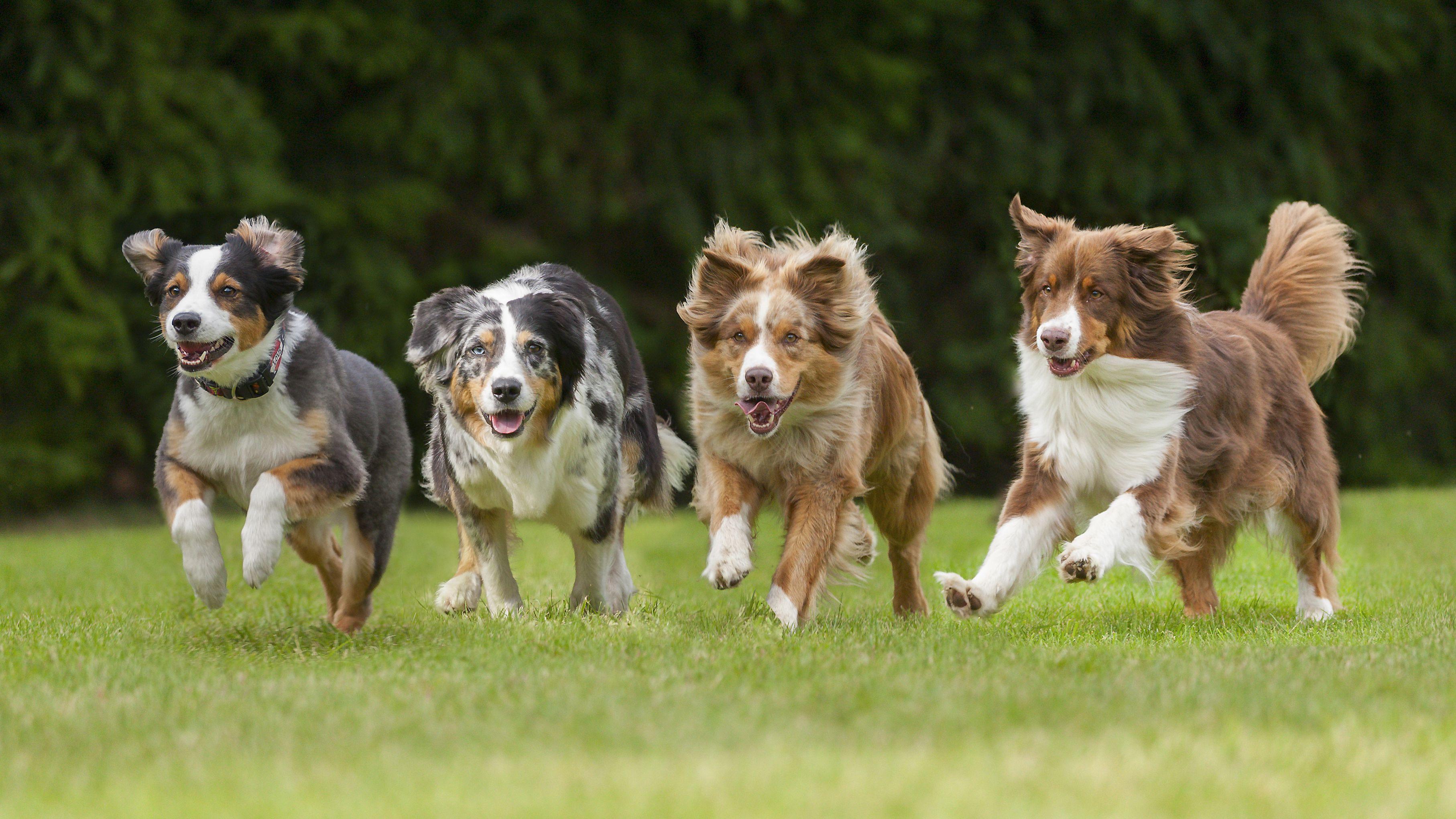 4 running dogs in a row 5c6461ebc9e77c ad