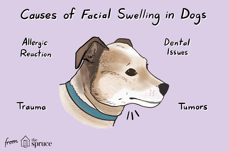 hinchazón facial en perros ilustración