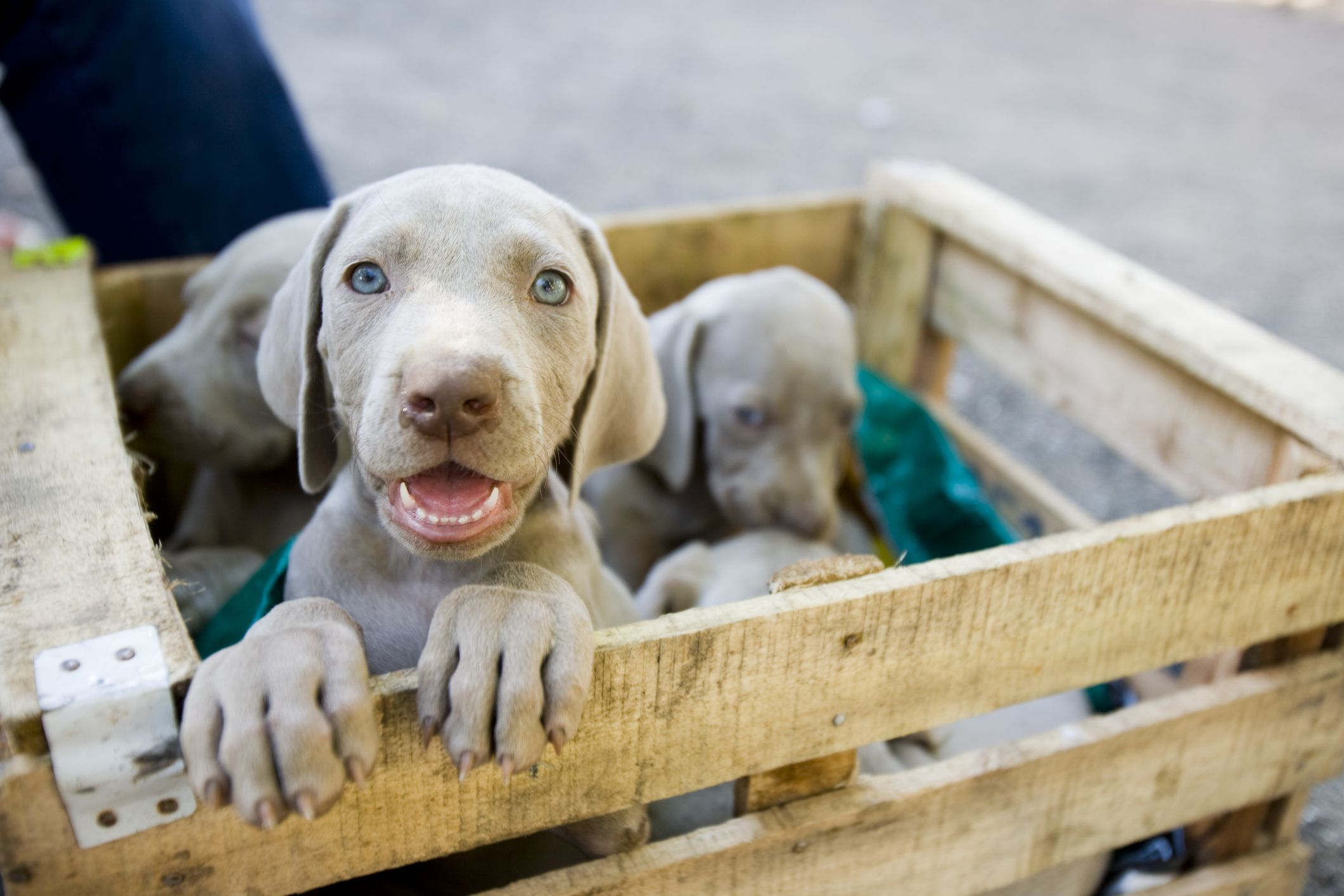 Questions To Ask A Dog Breeder Before Buying A Puppy