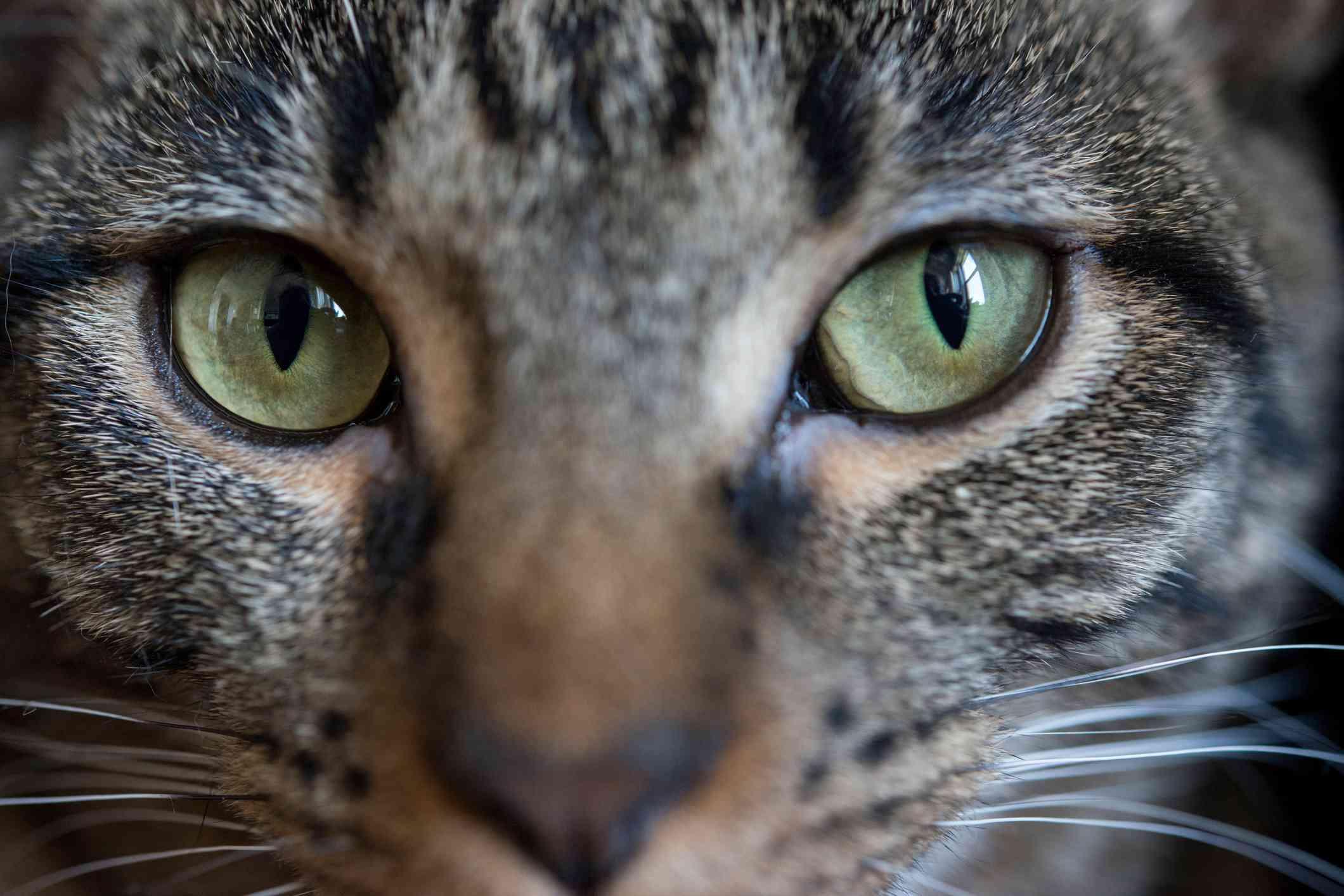 Cat eyes close-up