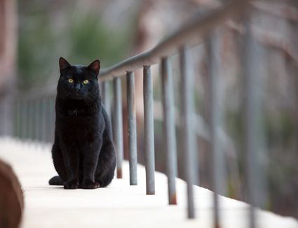black cat on a porch