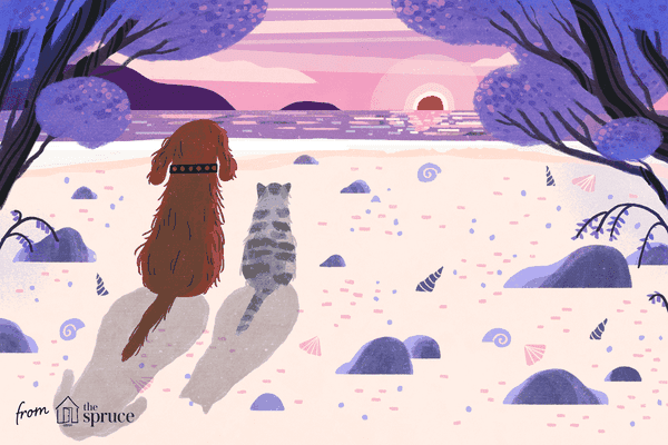 illustration of dog and cat looking off into the sunset; pet ethuanasia