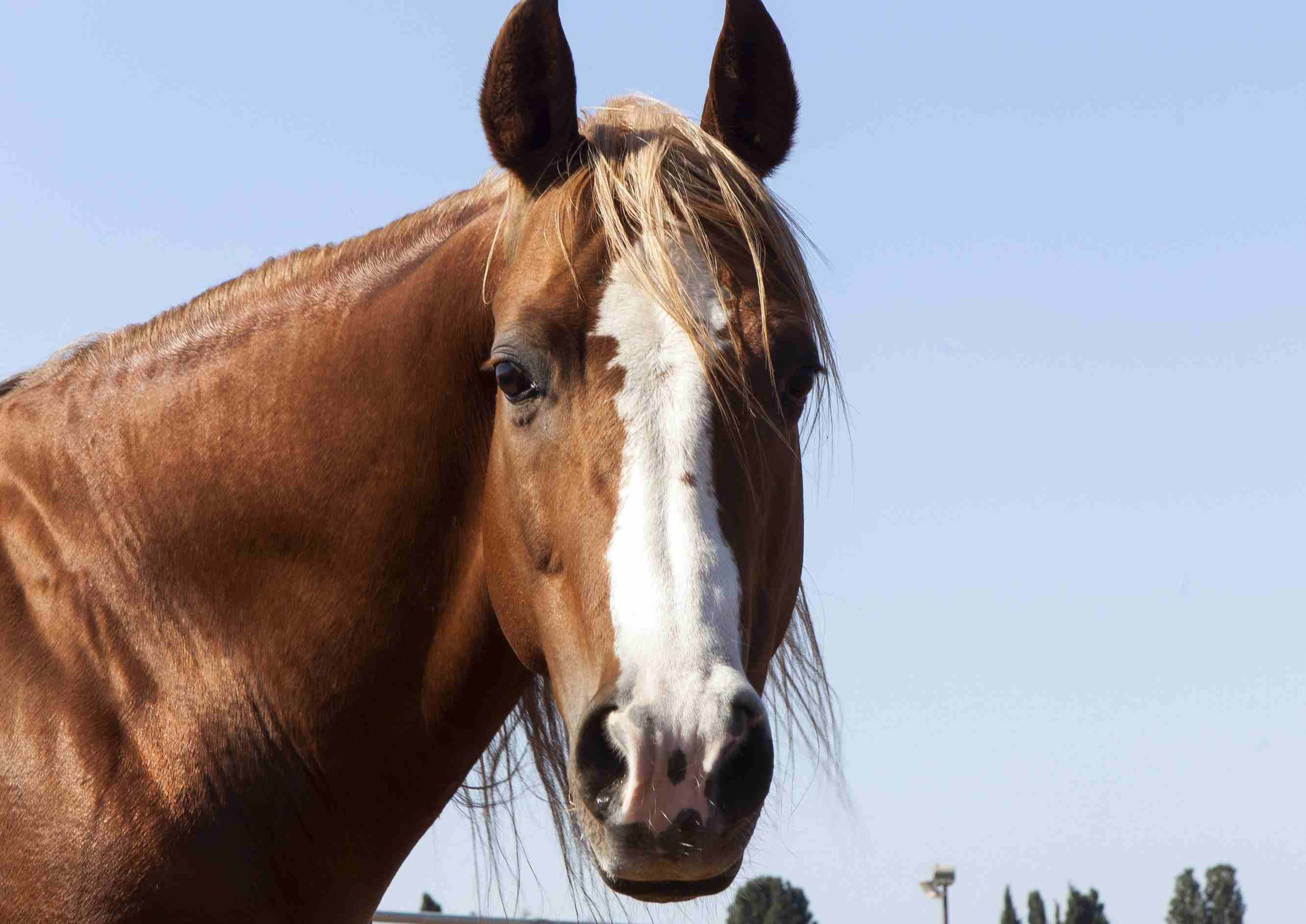 A horse looking directly forward.