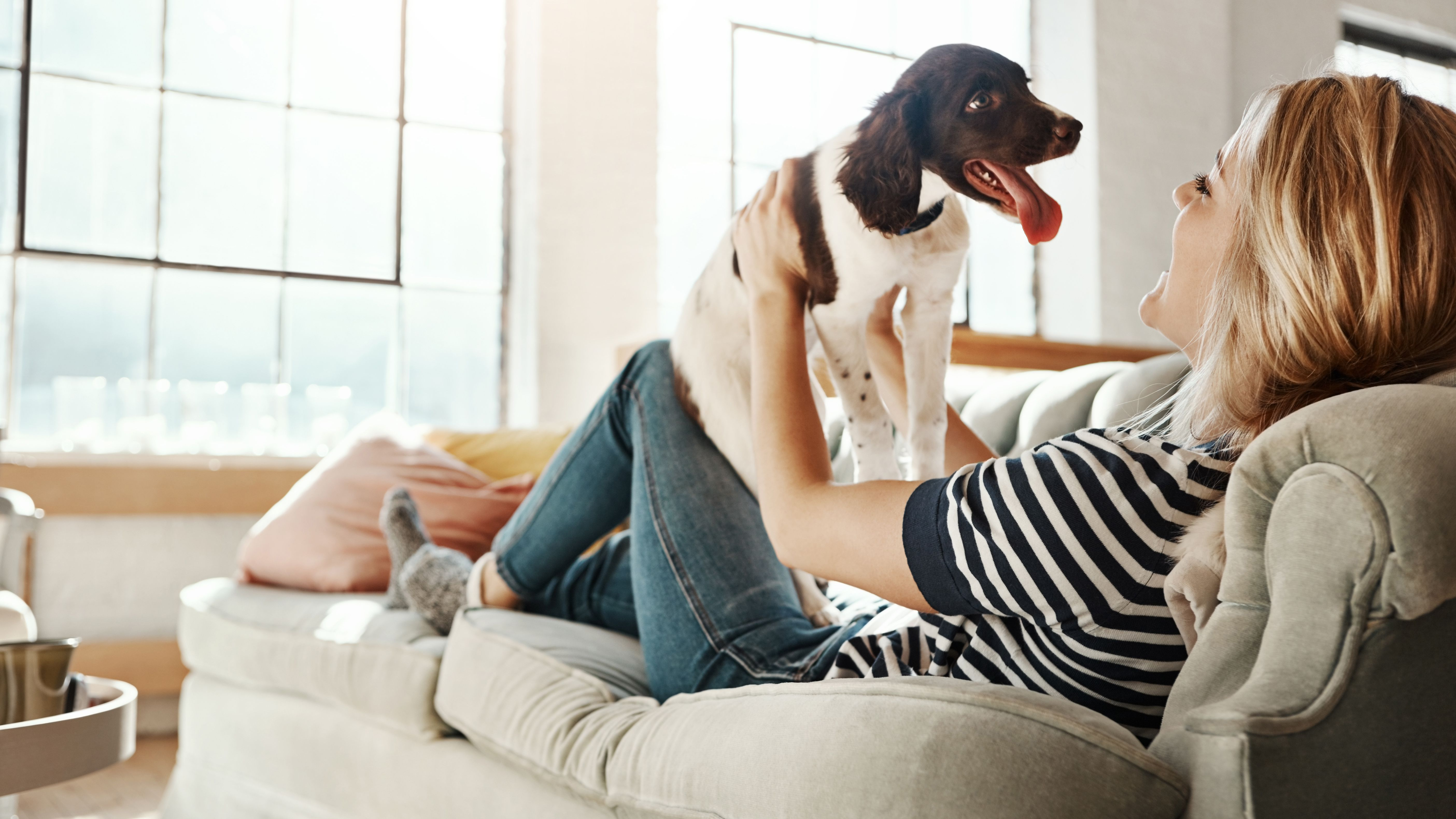 Tests To Predict Puppy Temperament And Personality
