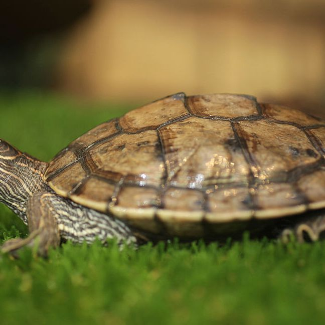 10 Types Of Turtles That Make Great Pets