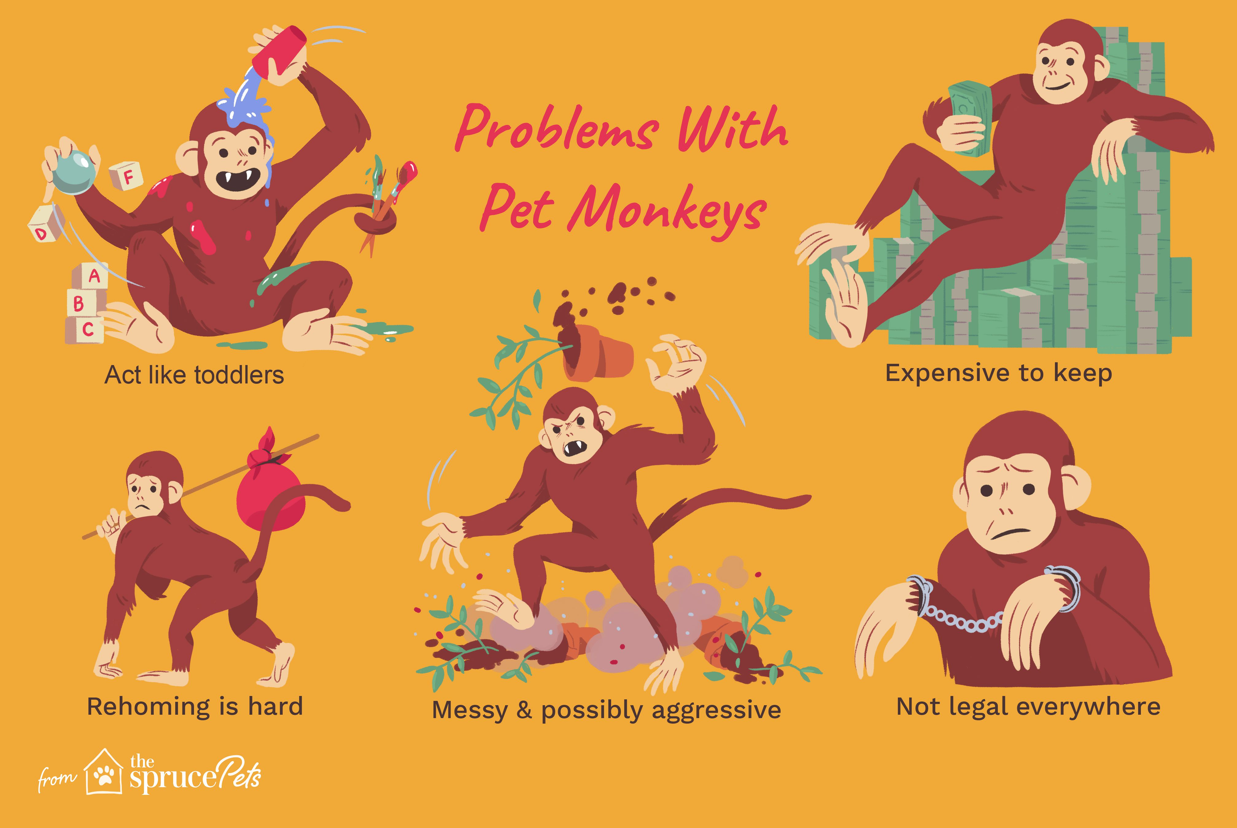 Illustration depicting problems with owning pet monkeys