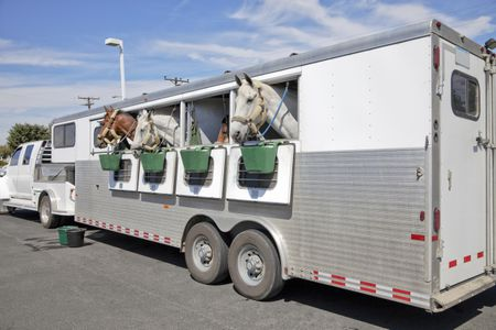 The Basics Of Horse Trailers