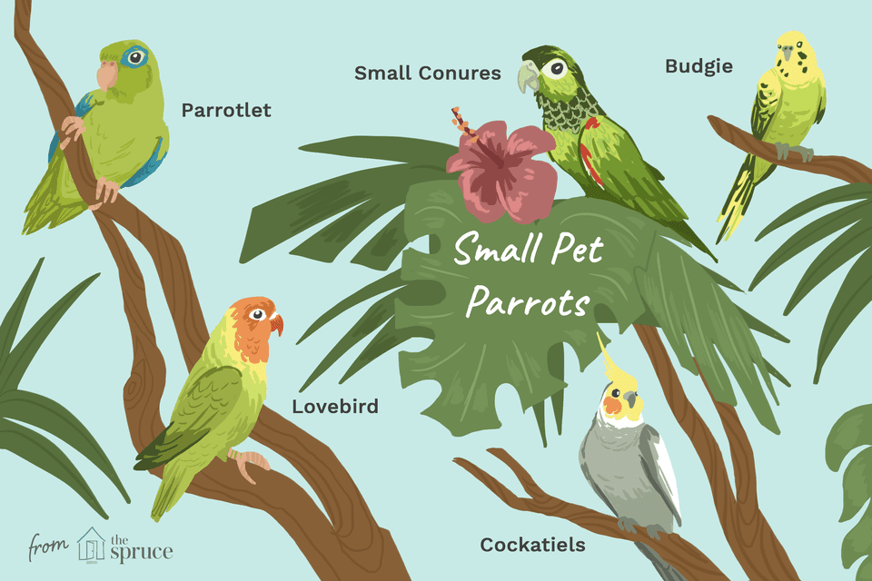 illustration of small pet parrots