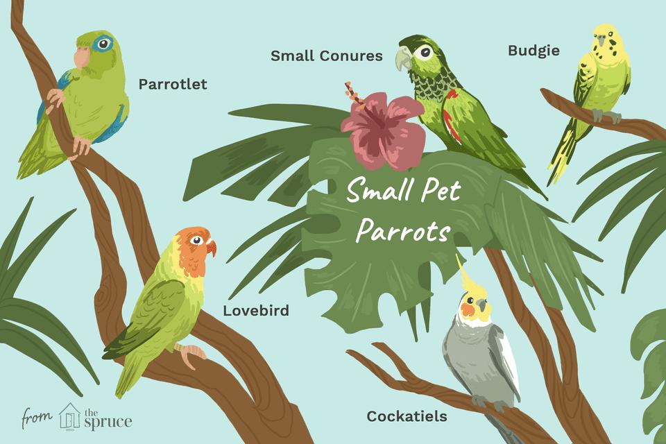 Ilustración de pequeños loros mascotas