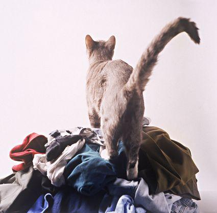 Cat Pees On Bathroom Rug