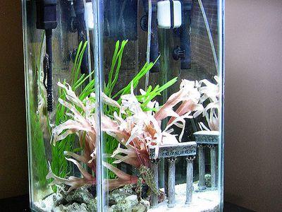 managing water ph in saltwater aquariums