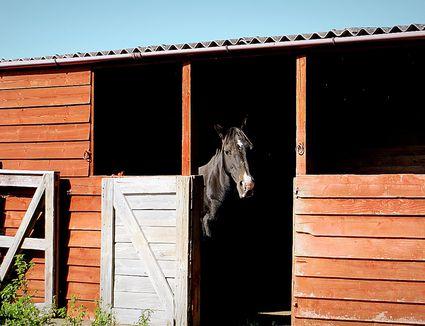 Horse standing in shelter with door open.