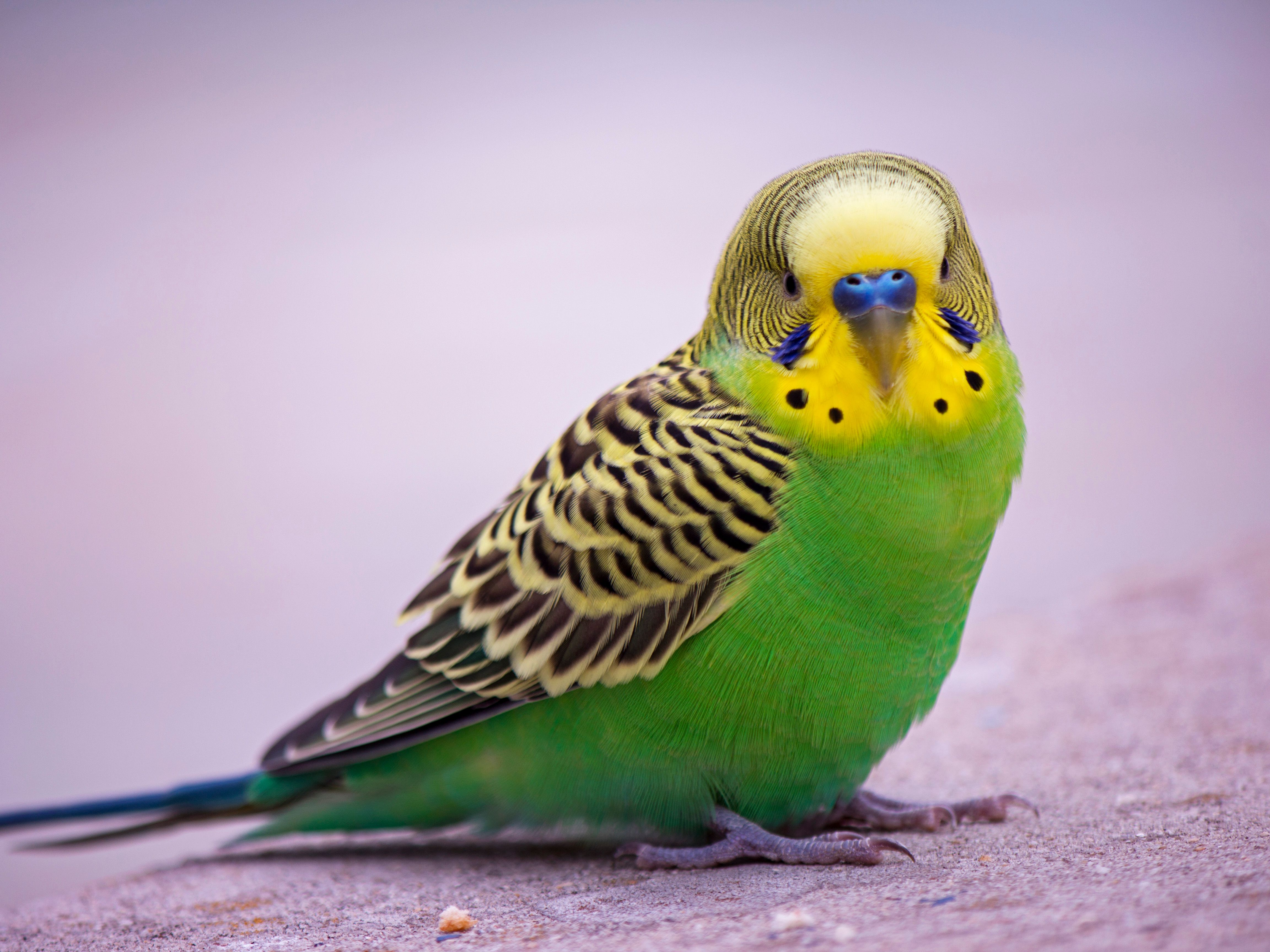 8 Top Green Parrots To Keep As Pets