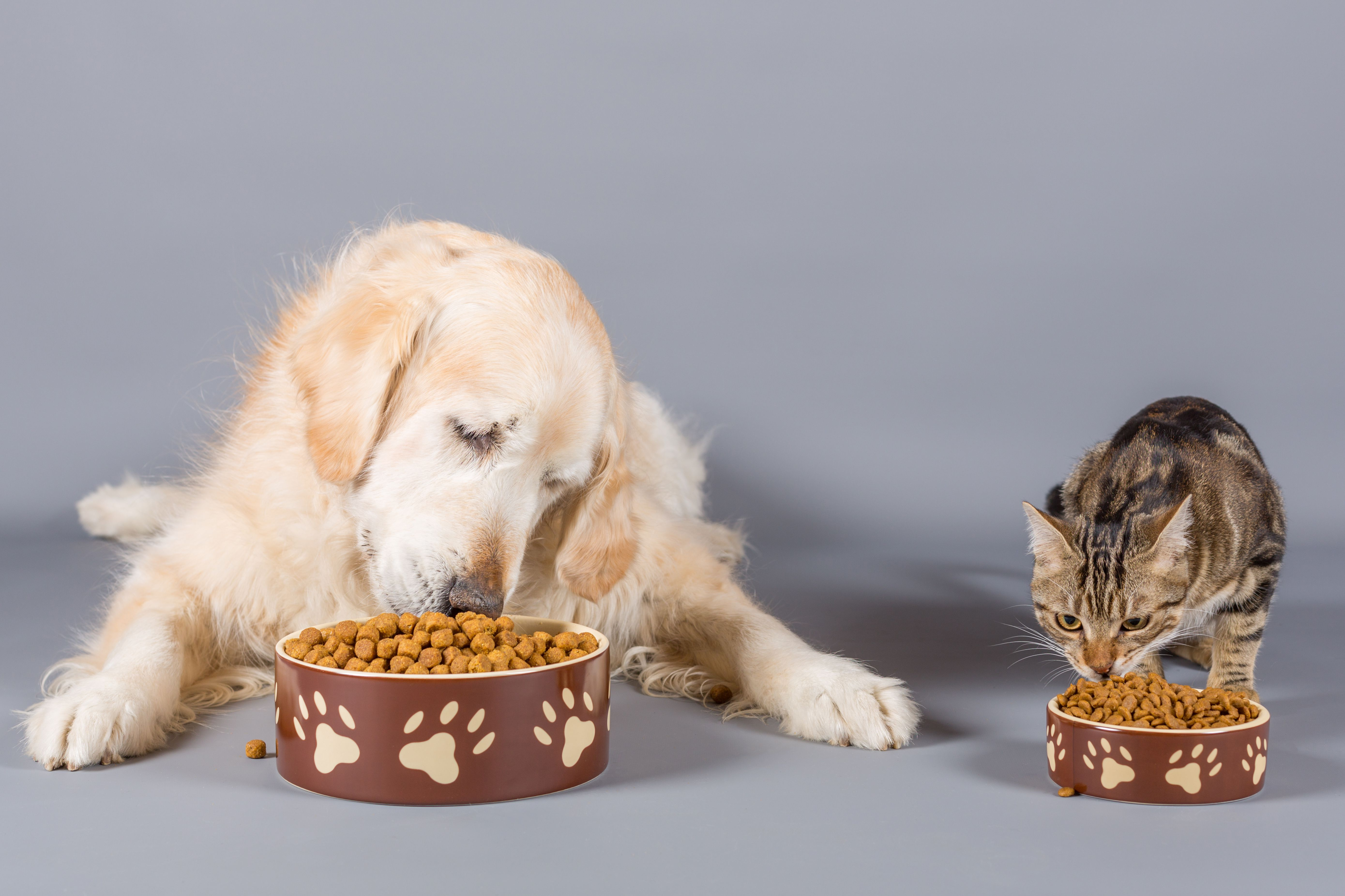 Can You Feed a Dog Cat Food?