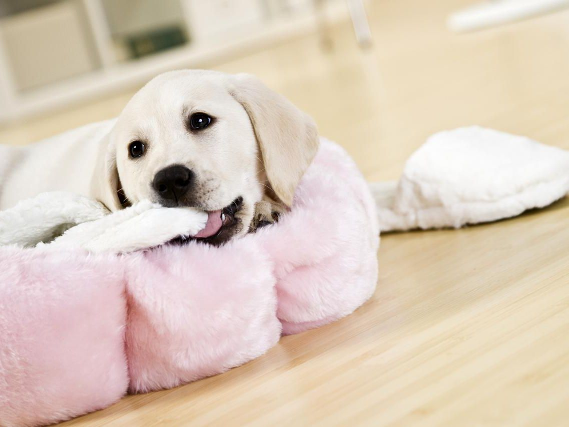 Puppies Eat Everything And How To Stop