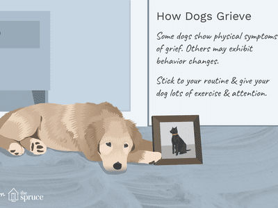 Do Dogs Grieve Over The Loss Of Other Pets