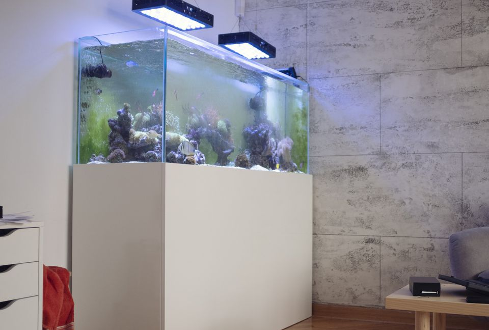 tanque de acuario
