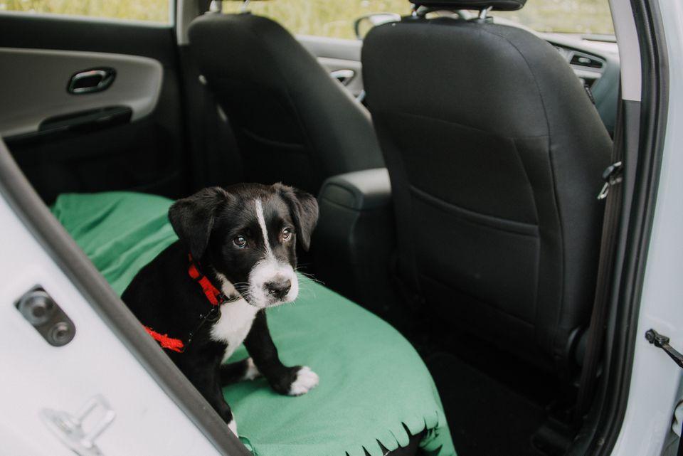 dog sitting on a blanket in a car
