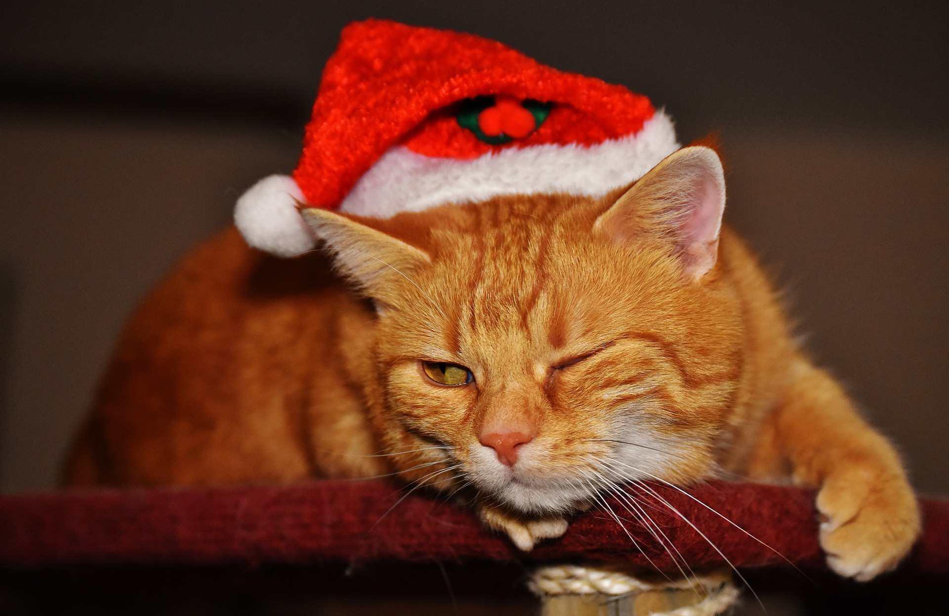 An orange cat wearing a Santa hat