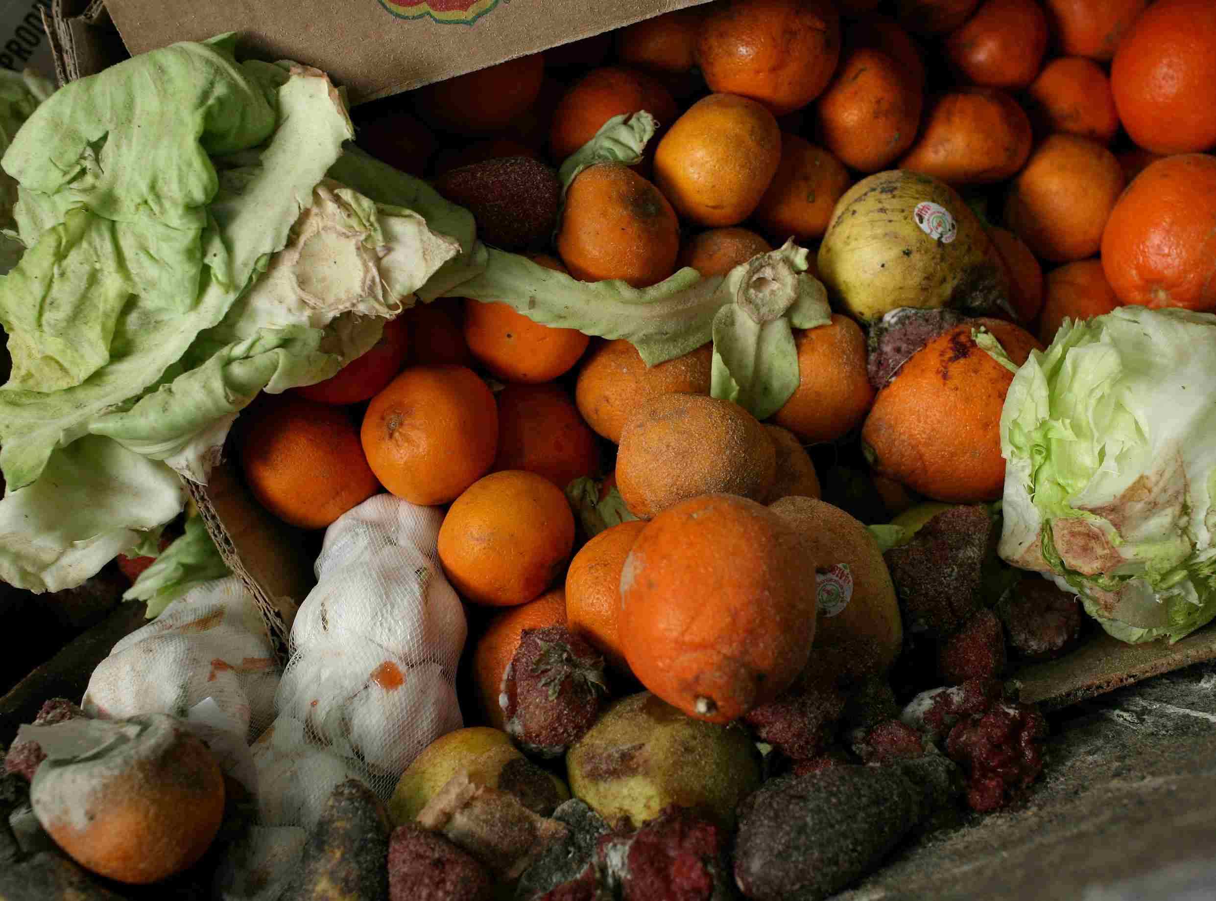 Rotten moldy food, including oranges and lettuce.