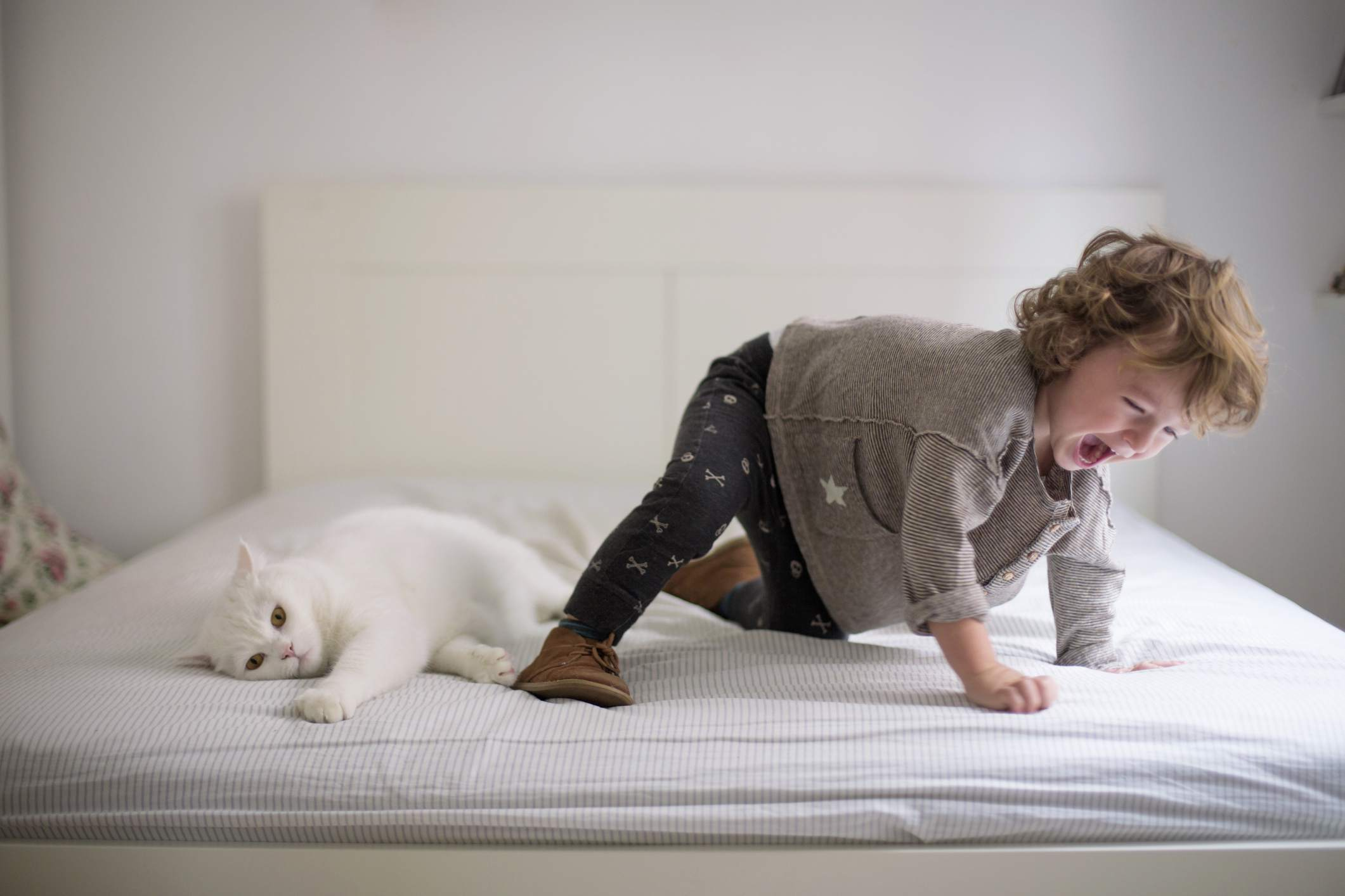 Cat not playing with toddler on parents' bed