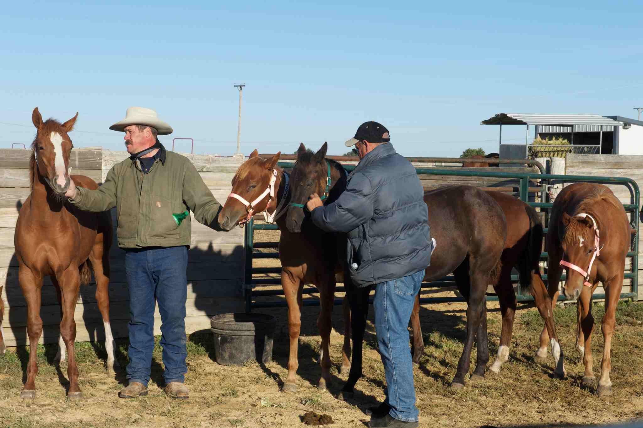 Subasta de caballos, Dixon, IL