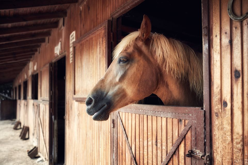 Headshot portrait of a horse in a barn