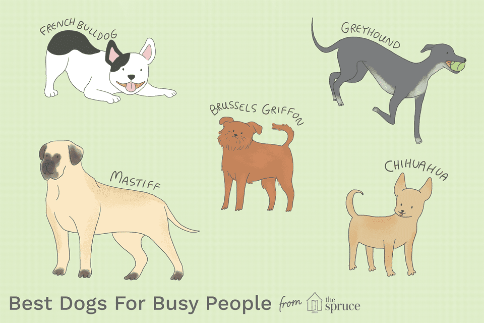 best breeds for busy people