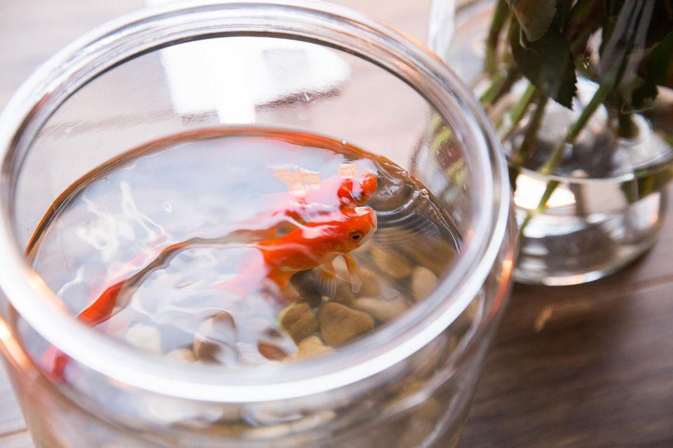Tanque de peces de colores