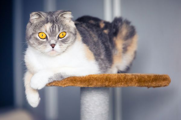 A cat sitting on a cat tree and looking into the camera.