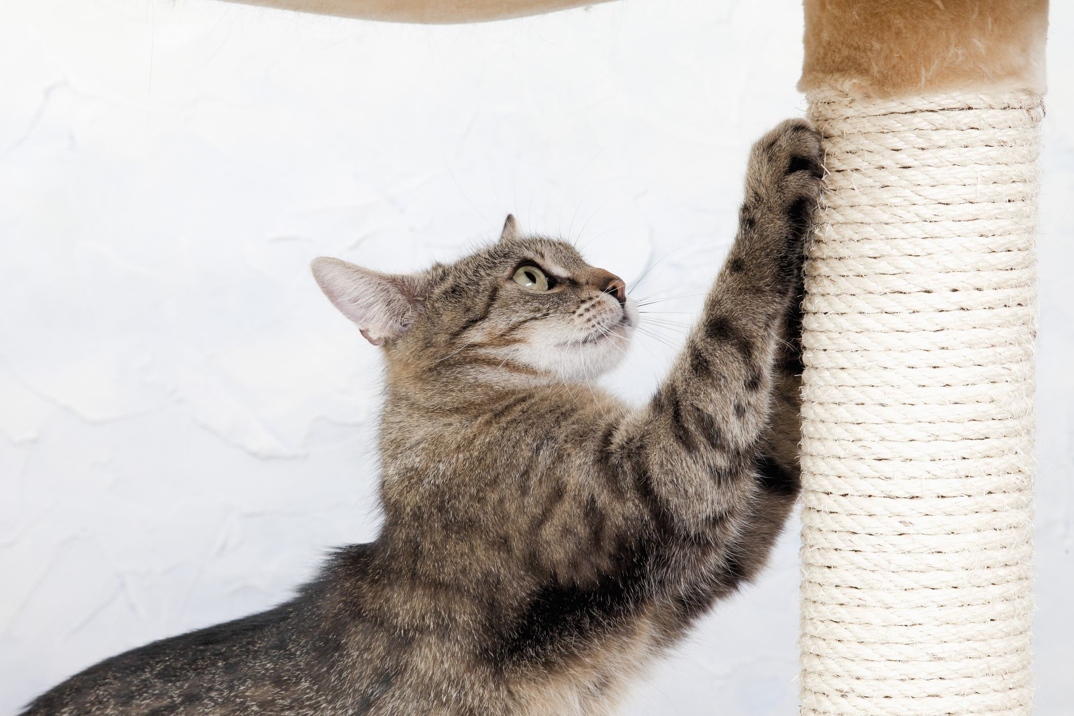 The 8 Best Cat Scratching Posts