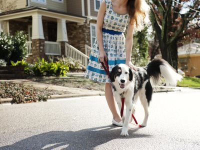 How to Train Your Dog to Be off the Leash