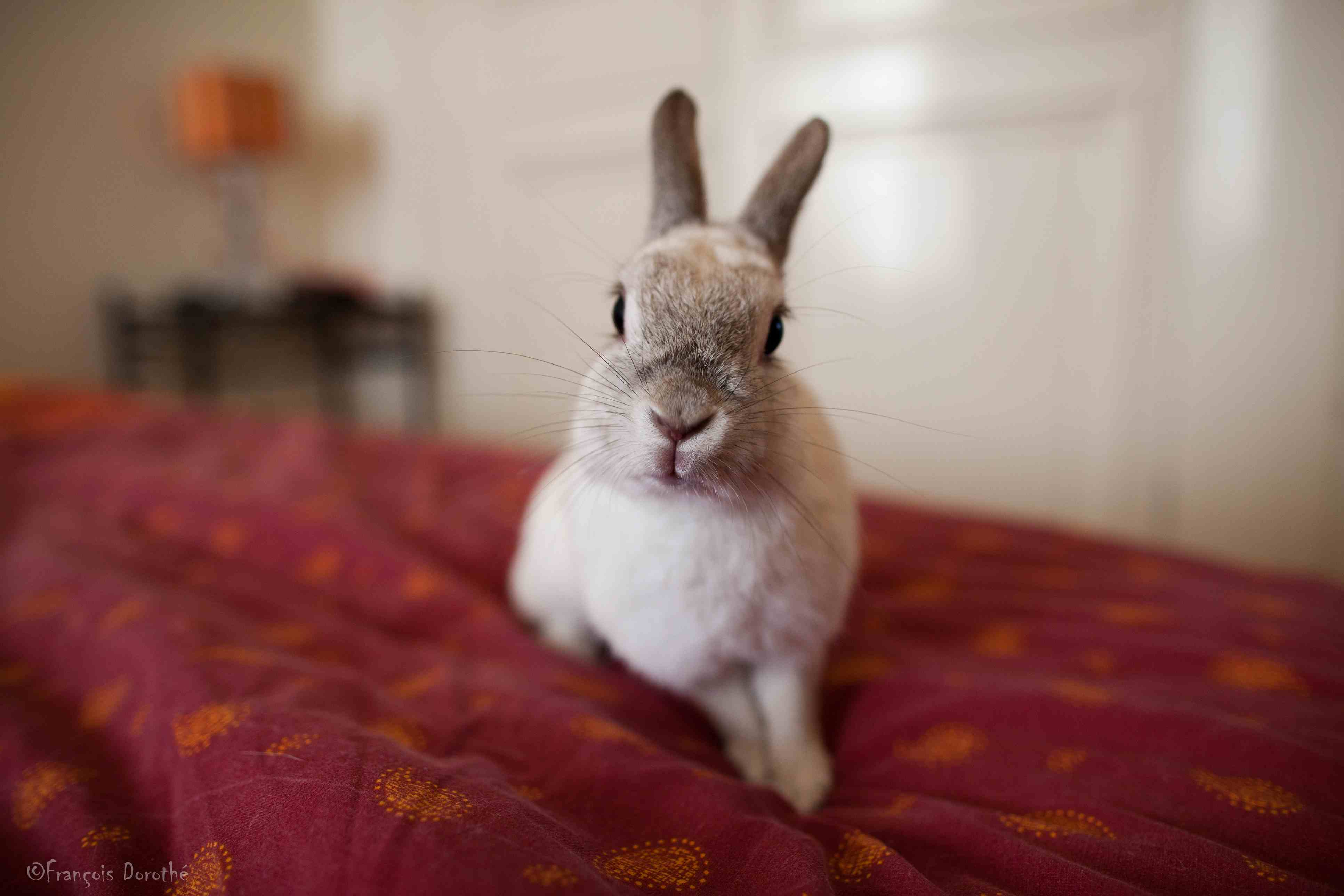rabbit on a bed
